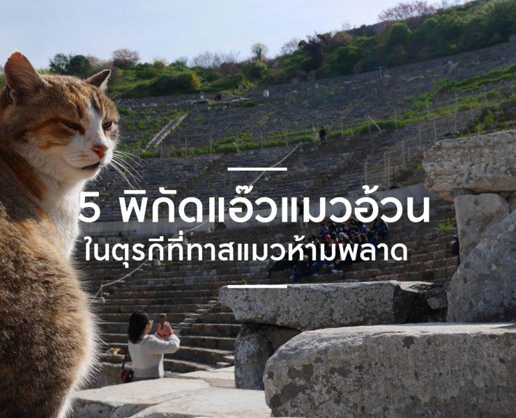 5 พิกัดแอ๊วแมวอ้วนในตุรกี