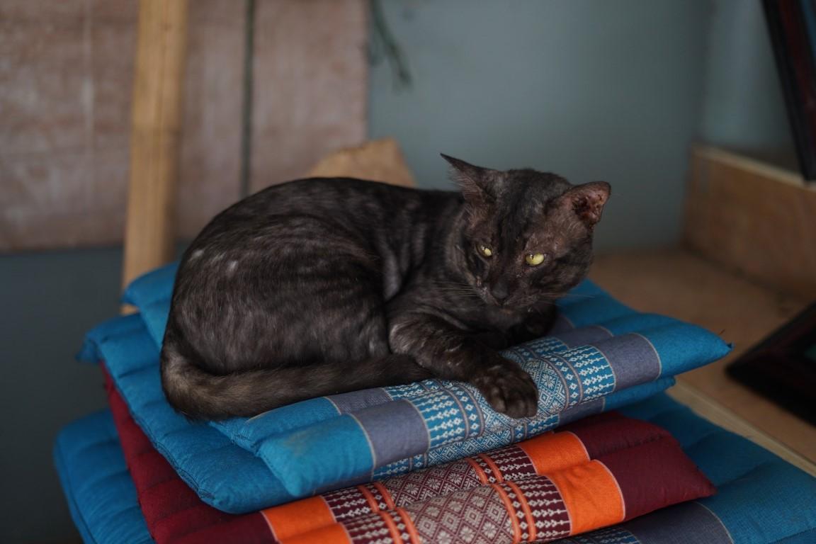 เจ้าเสือ แมวที่แวะเวียนมาเยี่ยมที่สดูดิโอ